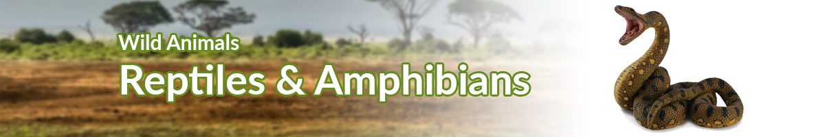 Wild Animals Reptiles & Amphibians banner - Click here to go back to Wild Animals