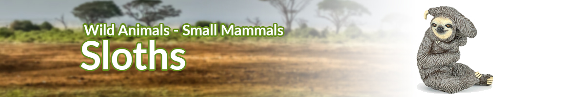 Wild Animals Sloths banner - Click here to go back to Wild Animals
