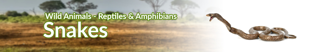 Wild Animals Snakes banner - Click here to go back to Wild Animals