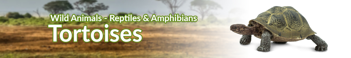 Wild Animals Tortoises banner - Click here to go back to Wild Animals