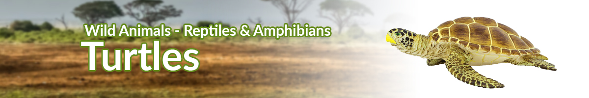 Wild Animals Turtles banner - Click here to go back to Wild Animals