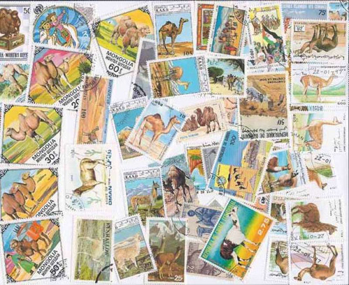 Camels on Stamps - Collection of 50 Stamps