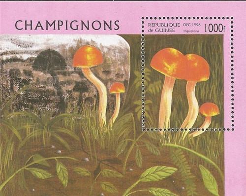 Guinea - 1996 Hygrophorus Mushroom - Souvenir Sheet - Scott #1353