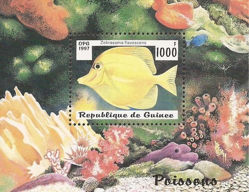 Guinea - 1997 Zebrasoma Flavescens Fish - Souvenir Sheet - Scott #1409
