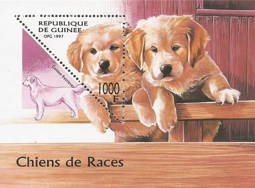 Guinea - 1997 Golden Retriever Dogs - Souvenir Sheet - Scott #1416