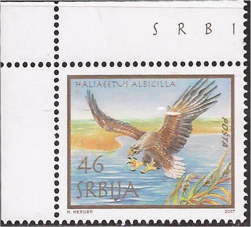 Serbia - 2007 White Tailed Eagle - Stamp MNH - Scott #399