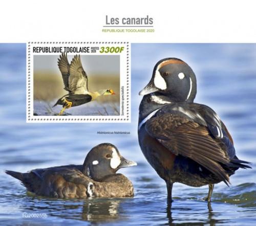Togo - 2020 King Eider Ducks - Stamp Souvenir Sheet - TG200255b