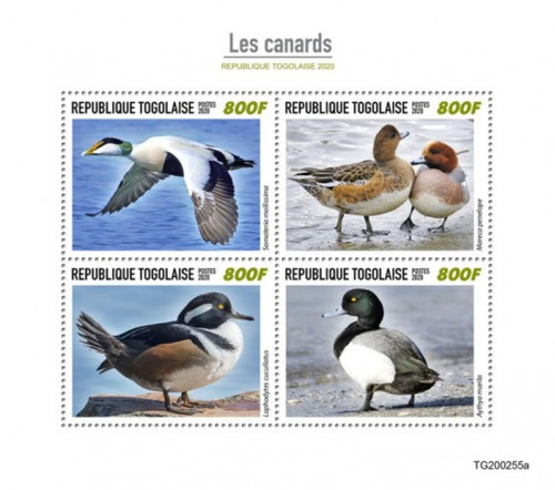 Togo - 2020 Ducks, Common Eider, Greater Scaup - 4 Stamp Sheet - TG200255a