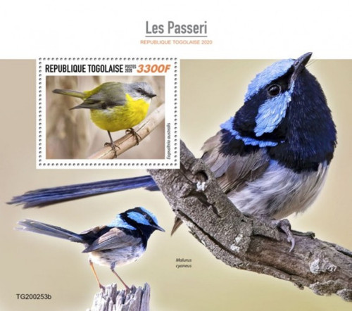Togo - 2020 Eastern Yellow Robin Songbirds - Stamp Souvenir Sheet - TG200253b