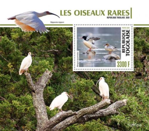 Togo - 2020 Scaly-sided Merganser Birds - Stamp Souvenir Sheet - TG200252b