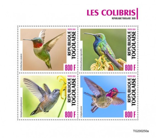 Togo - 2020 Hummingbirds, Broad-tailed, Anna's - 4 Stamp Sheet - TG200250a