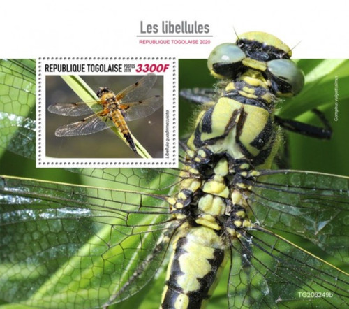 Togo - 2020 Four-spotted Chaser Dragonflies - Stamp Souvenir Sheet - TG200249b