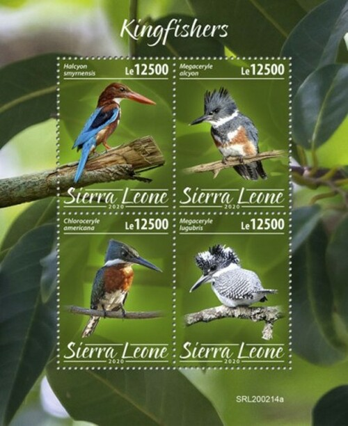 Sierra Leone - 2020 Kingfishers, Belted, Green - 4 Stamp Sheet - SRL200214a