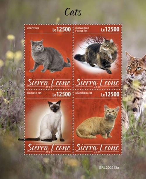 Sierra Leone - 2020 Cats, Breeds, Siamese, Munchkin - 4 Stamp Sheet - SRL200213a