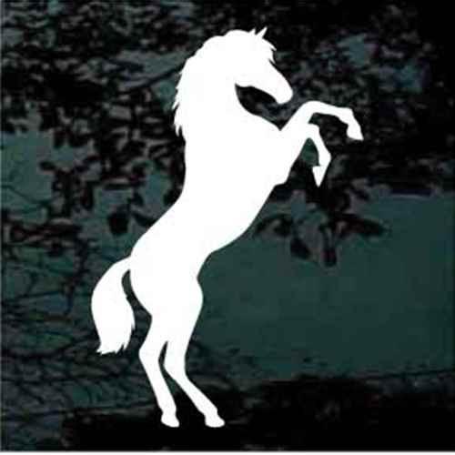 Pinto Horse Rearing