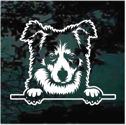 Border Collie Peeking Doggie In The Window Decals