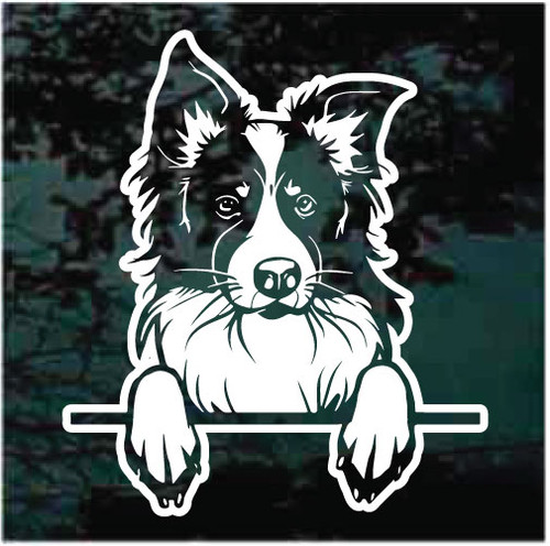 Awesome Border Collie Peeking Doggie In The Window Decals