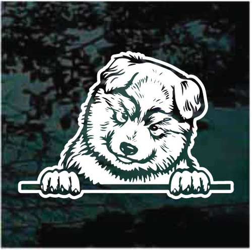 Alaskan Malamute Puppy In The Window Decals