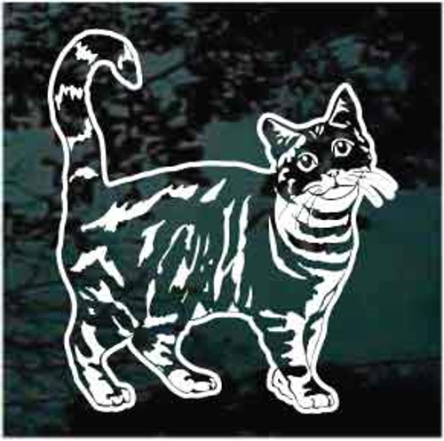 American Tabby Cat Window Decal