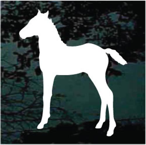 Arabian Foal 01