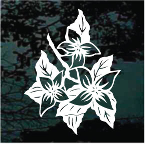 Dogwood Blooms 01