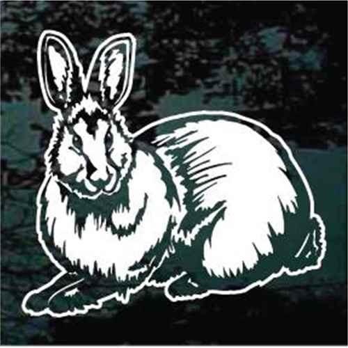 Detailed Rabbit