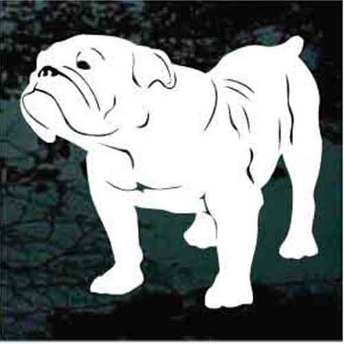 British Bulldog Standing