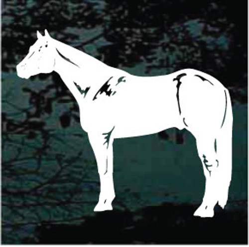 Quarter Horse Standing
