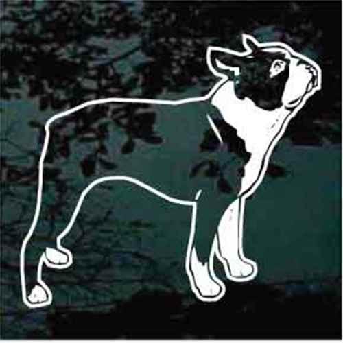Begging Boston Terrier Window Decal