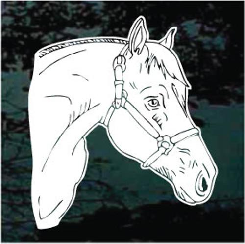 Quarter Horse Head 02