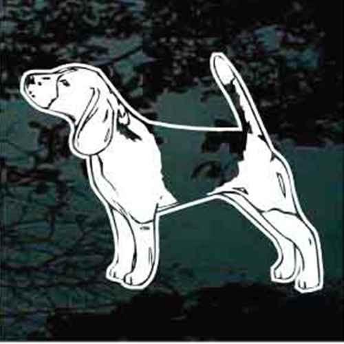 Beagle Stance