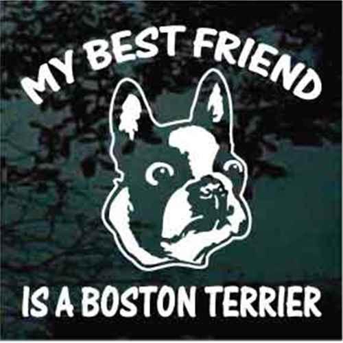 Best Friend Boston Terrier Head Window Decals