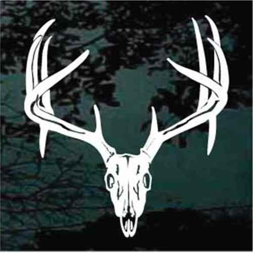 12 Point Deer Skull