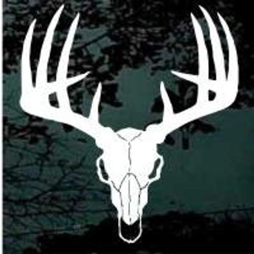 European Deer Skull Mount