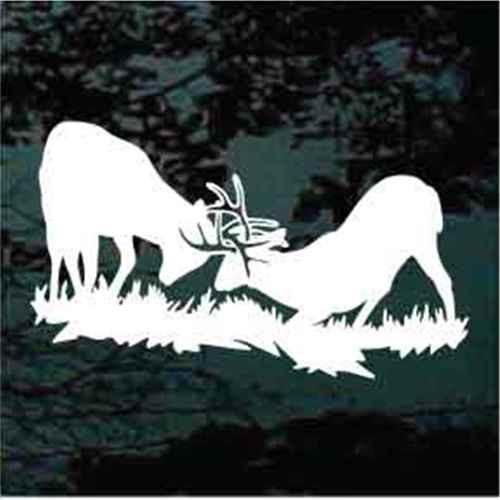 Fighting Deer