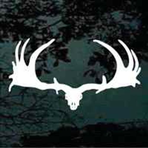 Large Moose Skull