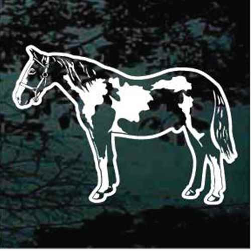 Detailed Pinto Horse Standing