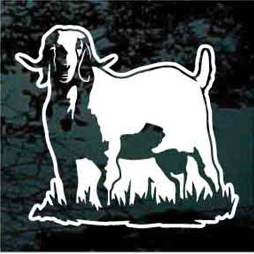 Boer Goat Standing In Grass