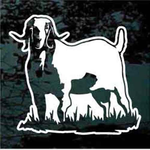 Boer Goat Standing In Grass Window Decals