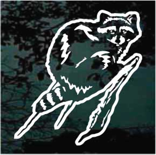 Raccoon On A Limb Window Decals