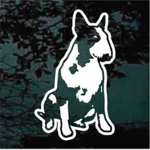 Bull Terrier Sitting