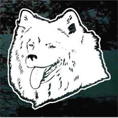 Samoyed Head
