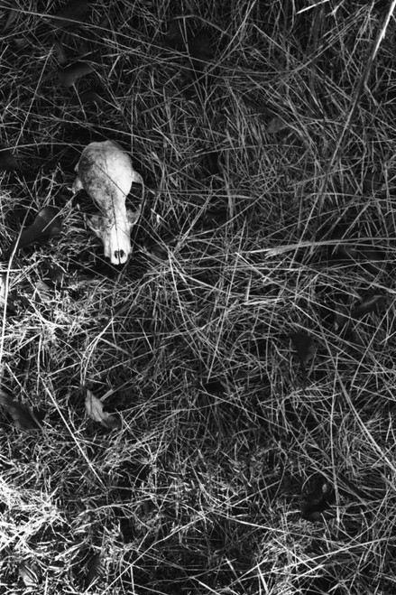 Life on Sea Island Spit is hard and dangerous, as this racoon discovered.