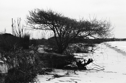 Defiance comes to mind. The ocean will win; however, the tree will not give up until the bitter end. Even then, the ocean, wind, and sun will work to evolve the tree into a sculpture.