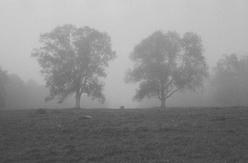 Ghost trees.