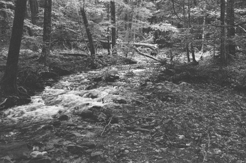 A stream to filter and fill a canteen.