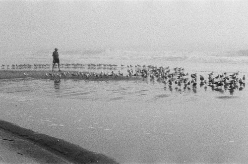 Fog, an incoming tide, peaceful thoughts, and as one with the birds.