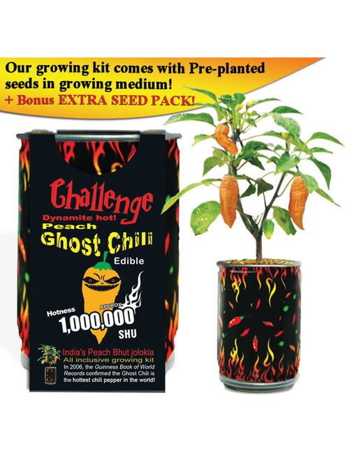 Challenge Peach Ghost Chili Pepper Plant - 1,000,000 SHU