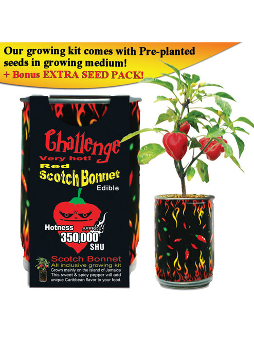 Challenge Red Scotch Bonnet Pepper Plant - 350,000 SHU