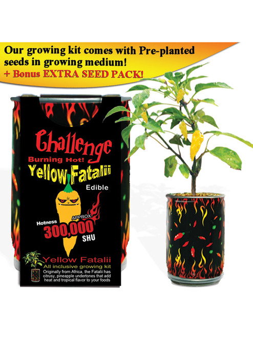 Challenge Yellow Fatalii Pepper Plant - 300,000 SHU